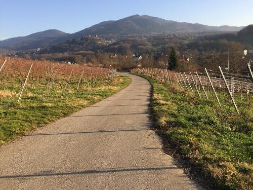Radtour durch die Weinorte Auggen, Schliengen, Mauchen von Badenweiler aus