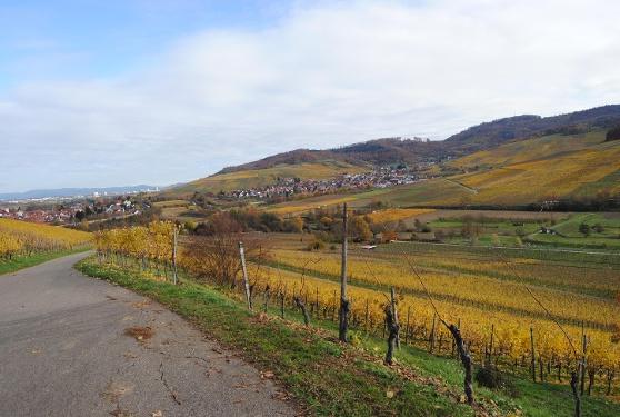 Radtour nach Freiburg von Badenweiler aus