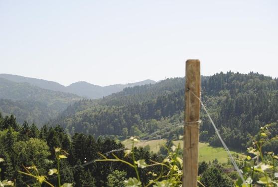 Radtour nach Sulzburg über Betberg von Badenweiler aus
