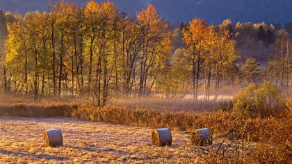 Radtour - Durchs Murnauer Moos - Herbststimmung im Moos