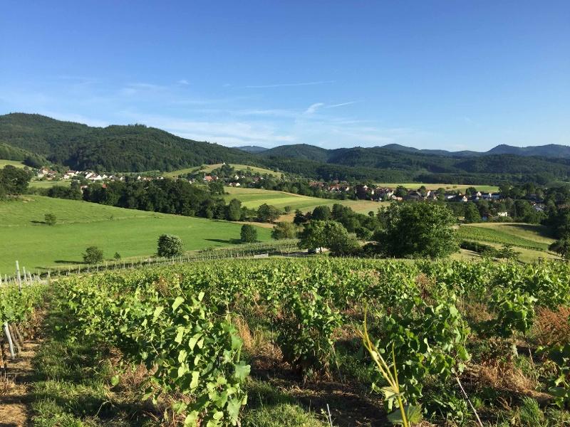 Radtour nach Kandern von Badenweiler aus