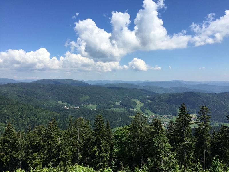 MTB Tour über den Hochblauen nach Kandern von Badenweiler aus