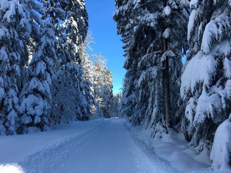 Loßburg Langlaufspur 2 - Vordersteinwaldspur