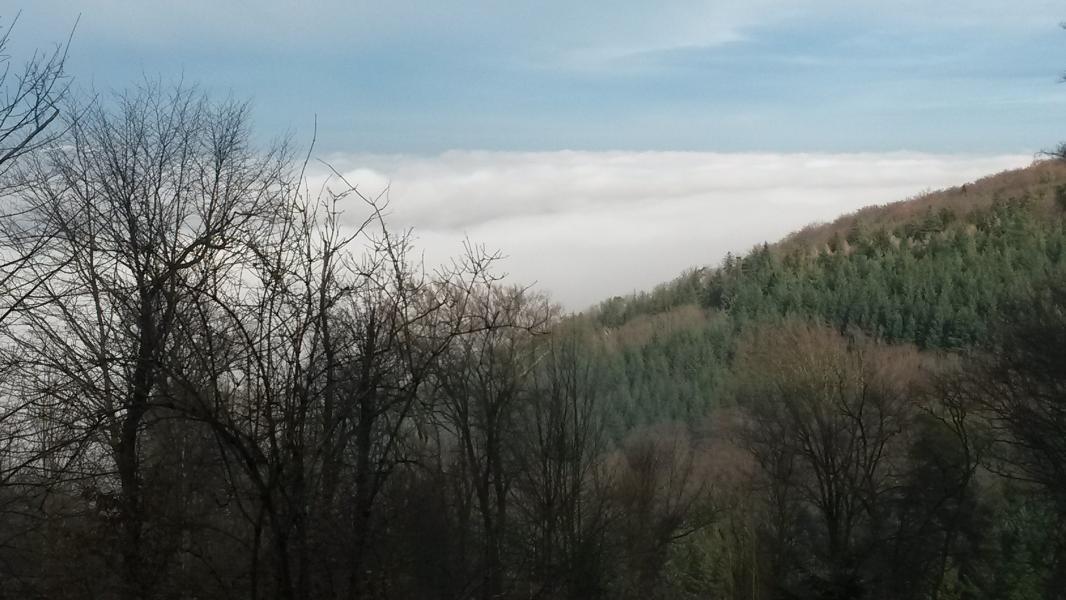 24.01.2016 - Waldprechtsweierer Winterlauf