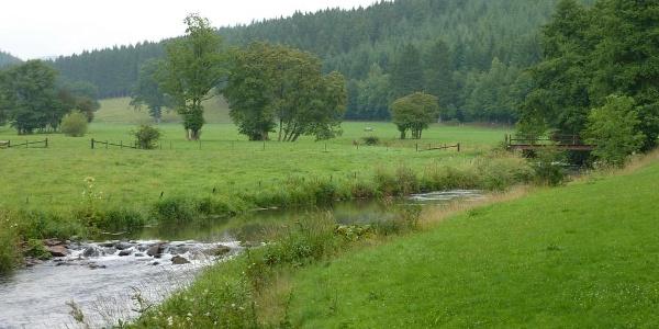 Flussgold Montenau