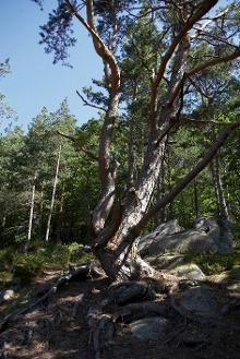 Hornberg - Gesundbrunnen-Route