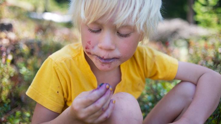 Kind beim Pflücken von Blaubeeren