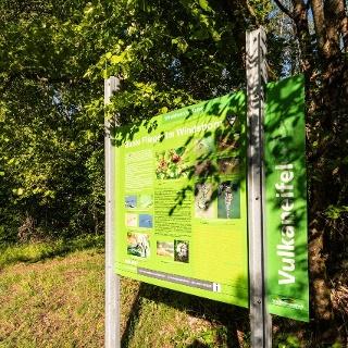 Windsborner Kratersee_Vulkaneifel-Pfad: VulkaMaar-Pfad: Etappe 1: Manderscheid-Bettenfeld-Meerfeld