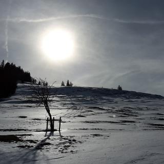 Starkatsgrund-Alpe