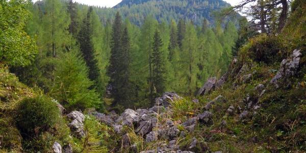 Jagasteig, im Hintergrund der Stubwieswipfel