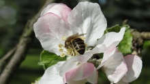 Bienen- und Naturlehrpfad