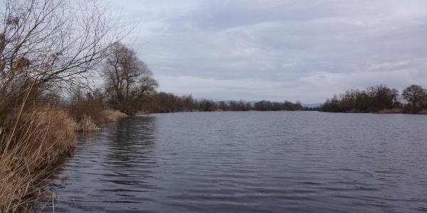 Blick auf die Öberauer Donauschleife
