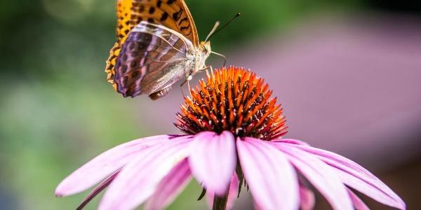 Farfalla su un fiore a Drio