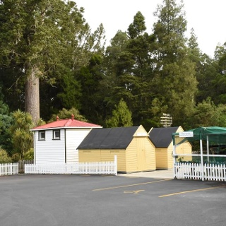 Warkworth District's Museum with kauri tree