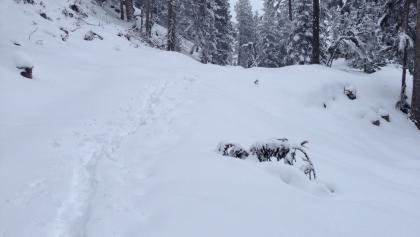 Tief verschneiter Pillerwald