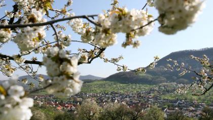 Blick auf Metzingen-Glems
