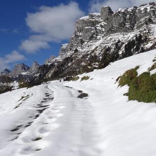 1042 bei Alp Berschner Ahoren   47°07'58.2