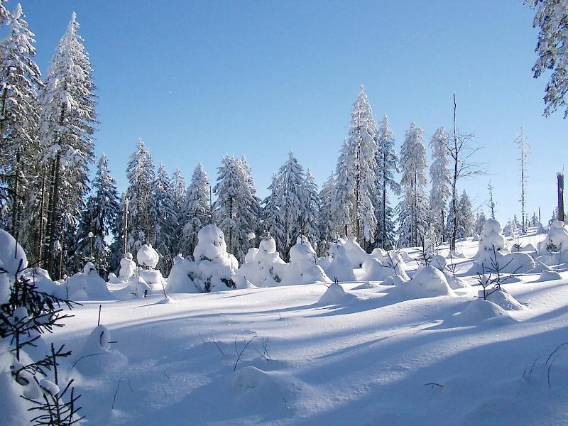 Schneeschuhtrail Tannenboden (Nr. 7)