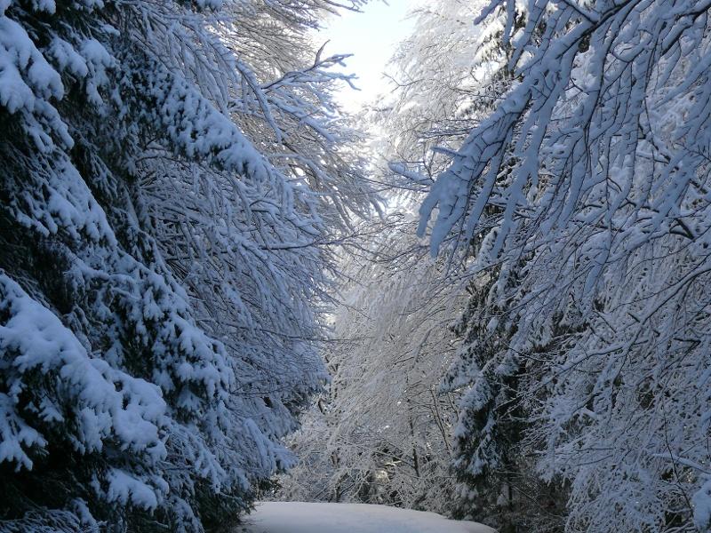 Schneeschuhtrail zum Wiedener Eck (Nr. 3)