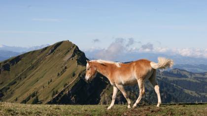 Pferd nahe Rindalphorn