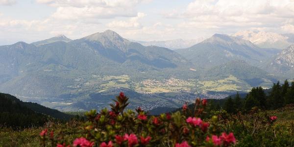 Alpenrosen und Blick auf Fleimstal