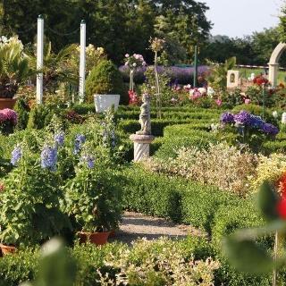 3.000 Rosenpflanzen im