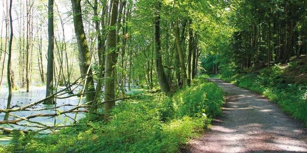 Schattige Wälder erleben