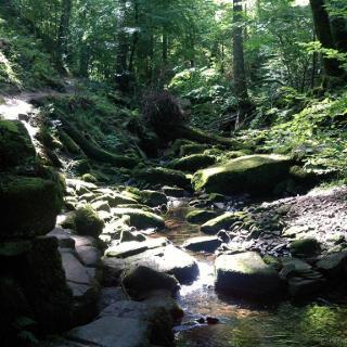 Das wildromantische Monbachtal