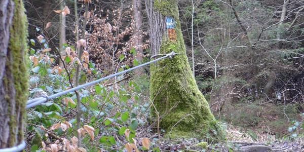Ein Seil hilft beim Auf- und Abstieg