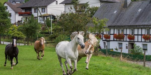 Pferdekoppel in Lenne