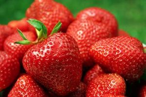 Erdbeerzeit im Spreewald