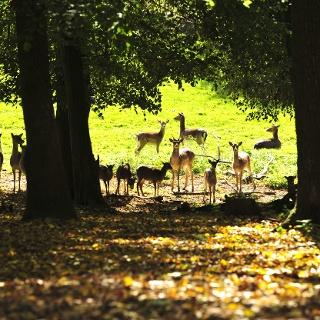 Naturpark Geras