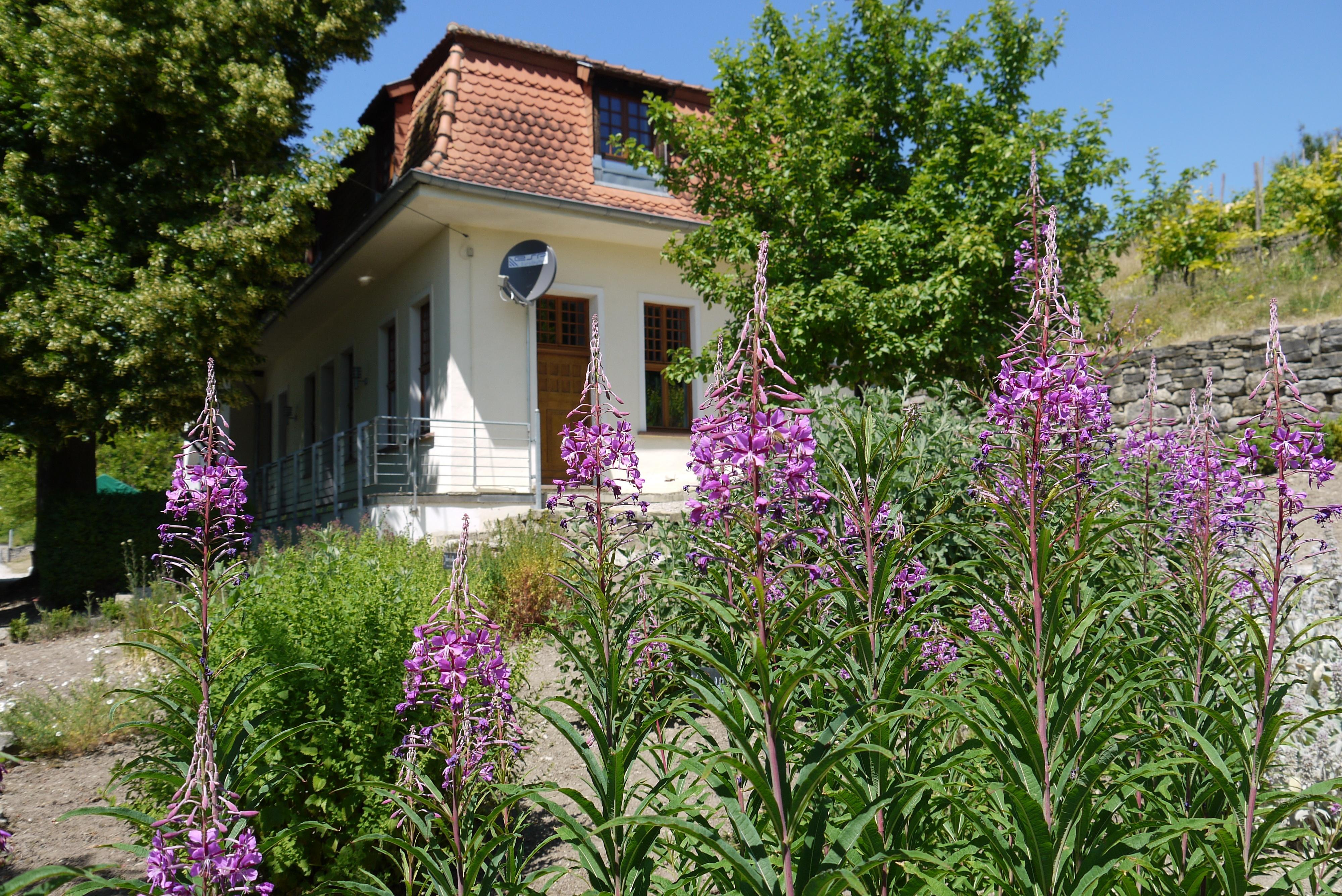 Haus Lochfeld - ein Garten mit Geschichte