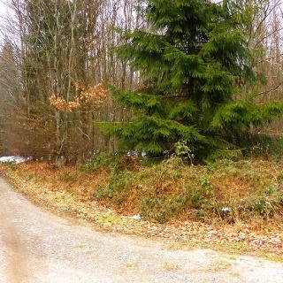 Endpunkt am Soonwaldsteig beim Rennweg