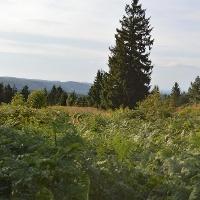 Blick vom Sattel zwischen den Gipfeln in Richtung Hermannsdenkmal