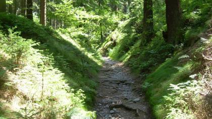 Hohlweg nahe Masserberg (Juni 2011)