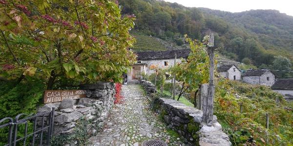 Auf einem Naturpflasterweg wandern wir durch die Weinberge hoch über Maggia.