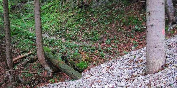 Eine rote Punktmarkierung kennzeichnet den alten Jagdsteig, der die Schütt quert