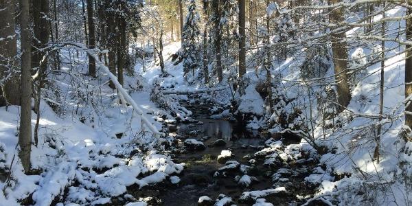 Am Schwarzwasserbach bei der Naturbrücke