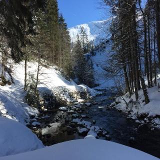 Schatten-Sonnen-Spiele am Schwarzwasserbach