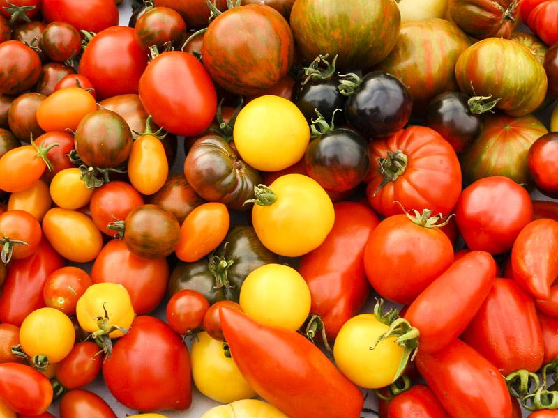 Riesige Auswahl an Tomatensorten  - @ Autor: Beate Philipp  - © Quelle: Thomas Hägele