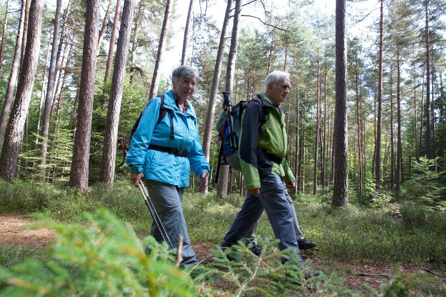 Durch die Schwarzwaldtannen in Wart