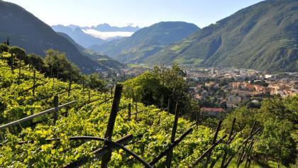 Die Weinstadt Bozen