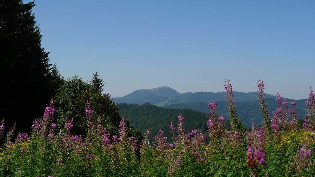 Vom höchsten auf den schönsten Schwarzwaldberg