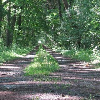 Weg zwischen Hesedorf und Langenhörn