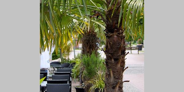 (c) Gaststätte am Rathaus draußen