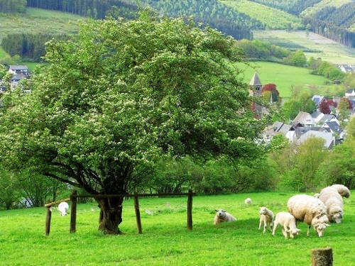 Blick auf Saalhausen, unterhalb des