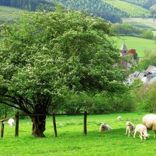 """Blick auf Saalhausen, unterhalb des """"Weißen Kreuzes"""""""