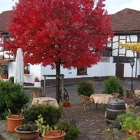Gasthaus Herbst