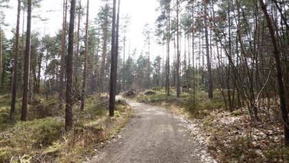 Waldweg bei Kalchreuth